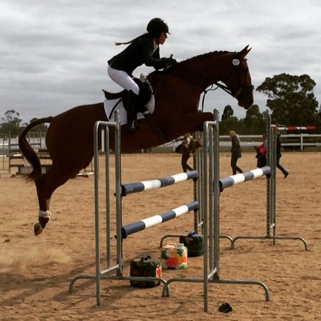 7 Y/O Registered Warmblood