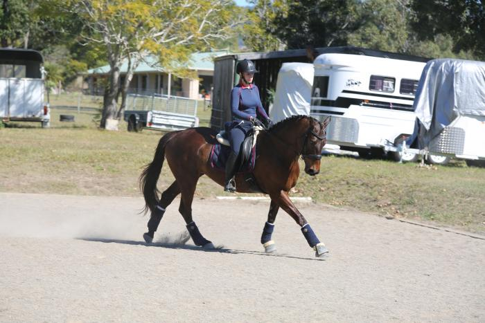 Elementary Dressage Mare