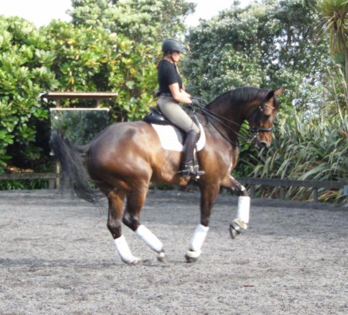 International Grand Prix Dressage Horse