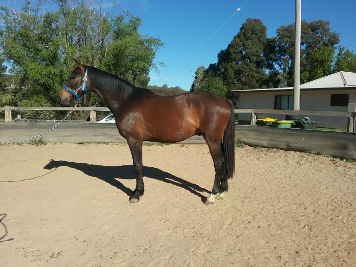 Exciting Smash Hit Gelding