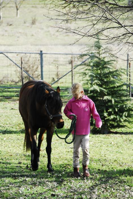 Quiet, Attractive Riding Pony