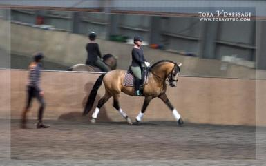 Training with FEI Para Equestrian Victoria Davies