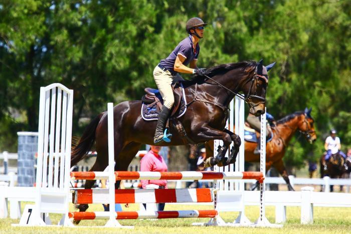 Fancy Irish sport horse mare