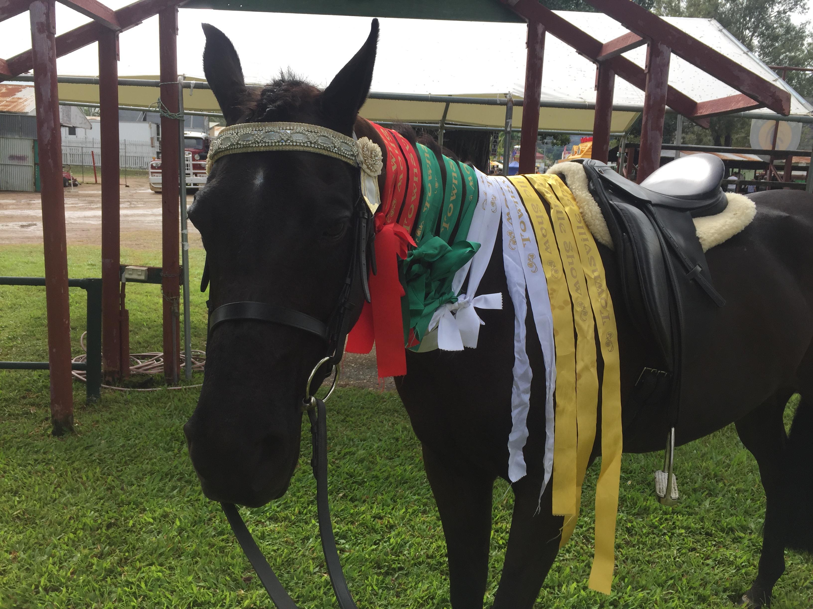 Broodmare Riding Pony