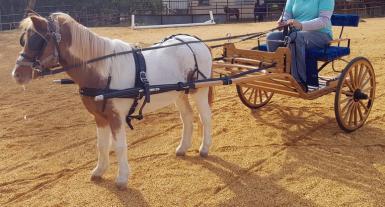 Pony Sulky & Harness
