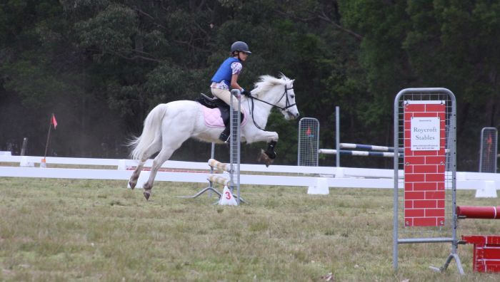 Ideal first pony - honest and unflappable