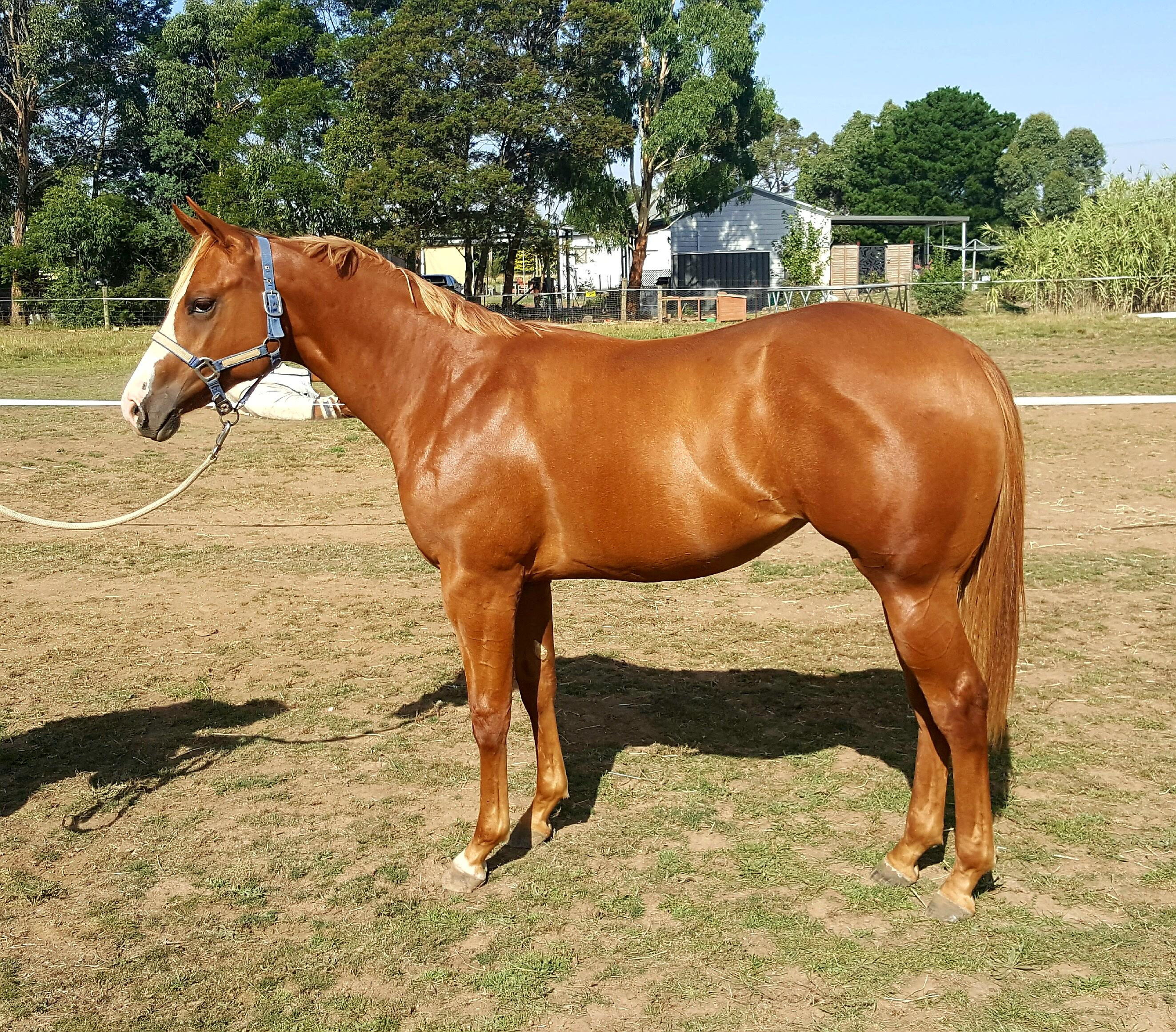 Yearling Filly Q-83023 by LP Kids Yella Image(imp)
