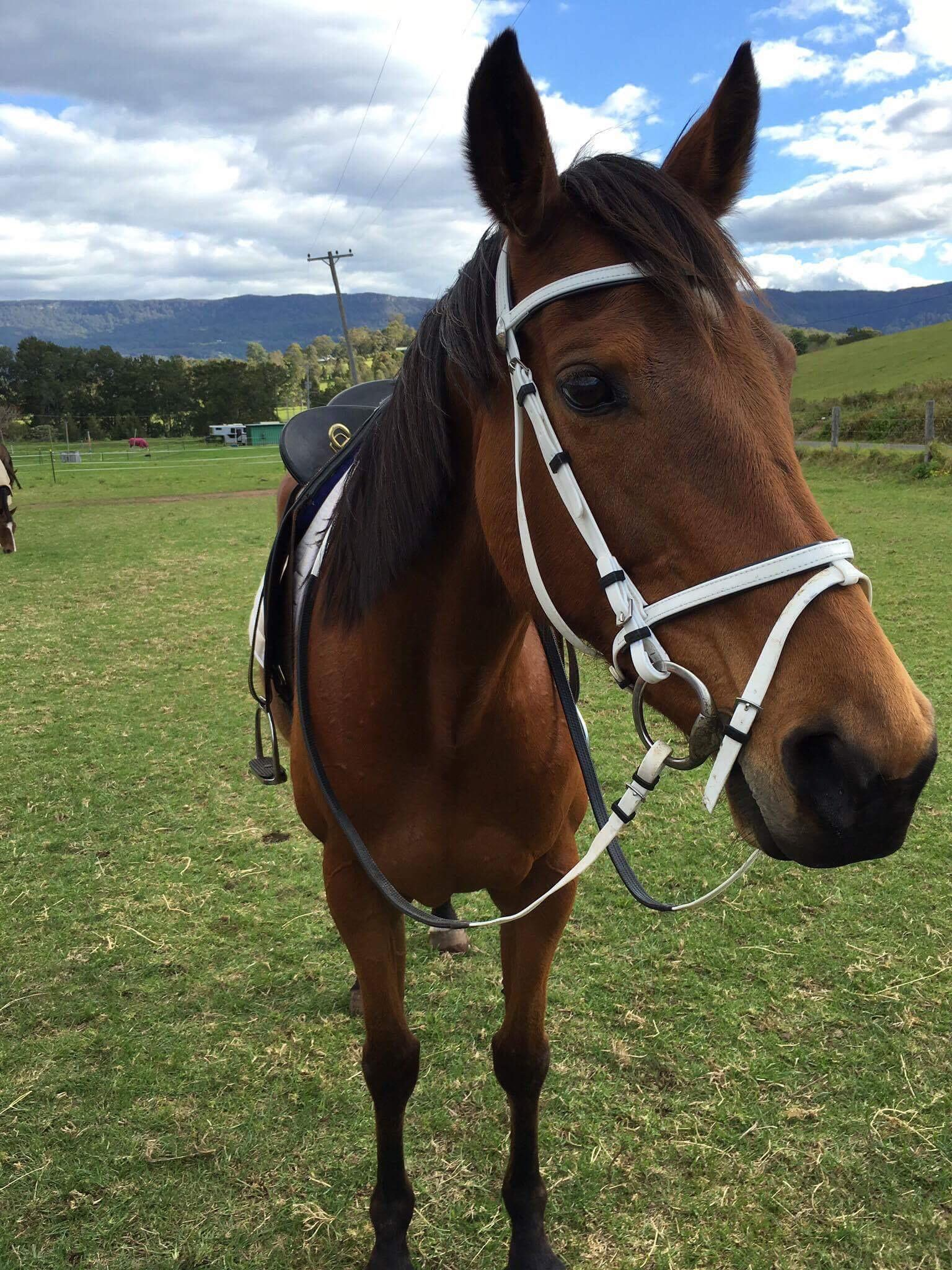 Beautiful quiet mare