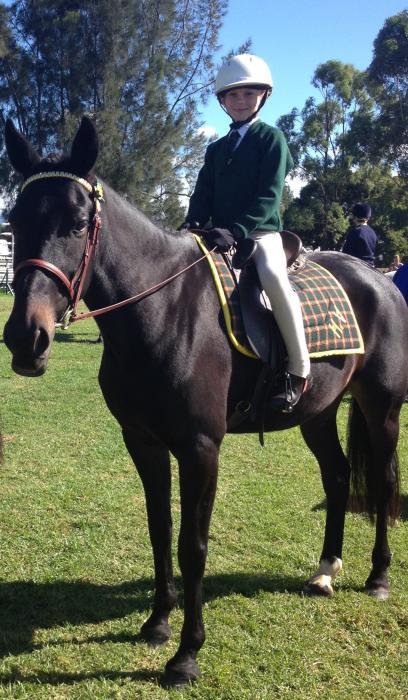 """""""Gentleman Jo"""" Standardbred horse"""