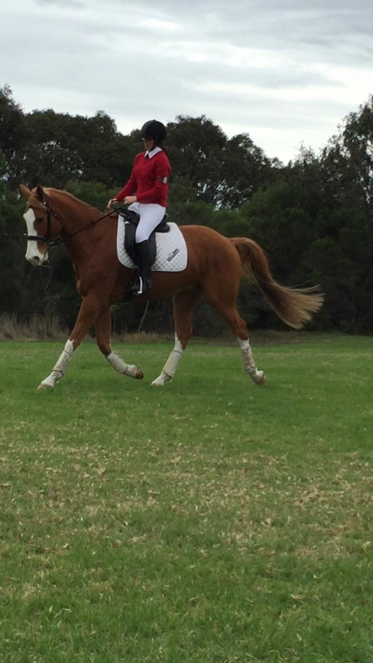 Unlimited Potential Dressage/Allrounder