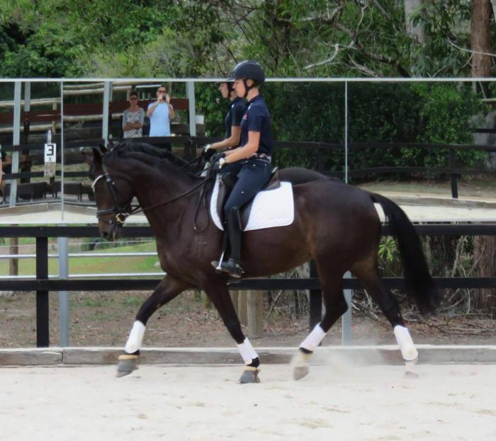 MUST BE SOLD ....  Interschool WB   9yr Mare