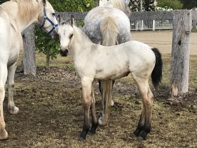 Killeenfarna Bronte at 5 weeks