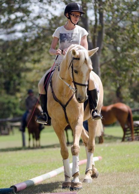Palomino Warmblood x - To Die For!
