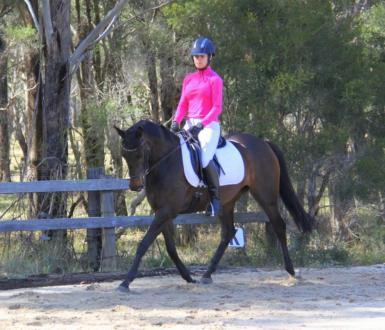 Photo Calm Wood Equestrian