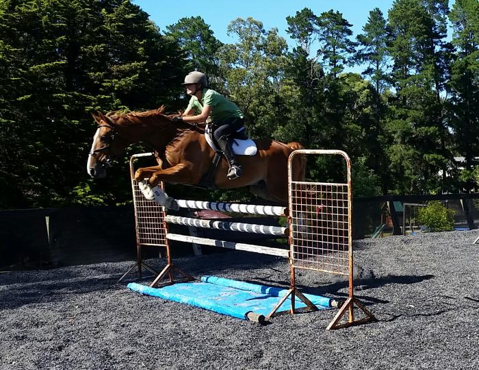 Superstar for dressage, showjumping or eventing