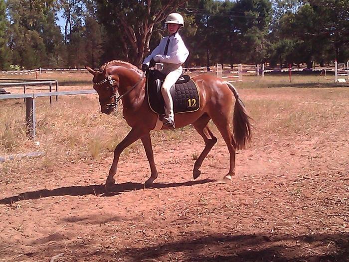 Dressage Pony price reduced