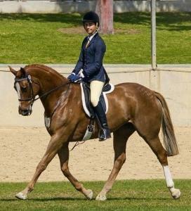 Beautiful mare and mum