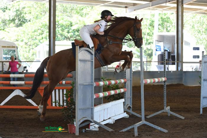 SPECIAL Competitive Showjumping Gelding