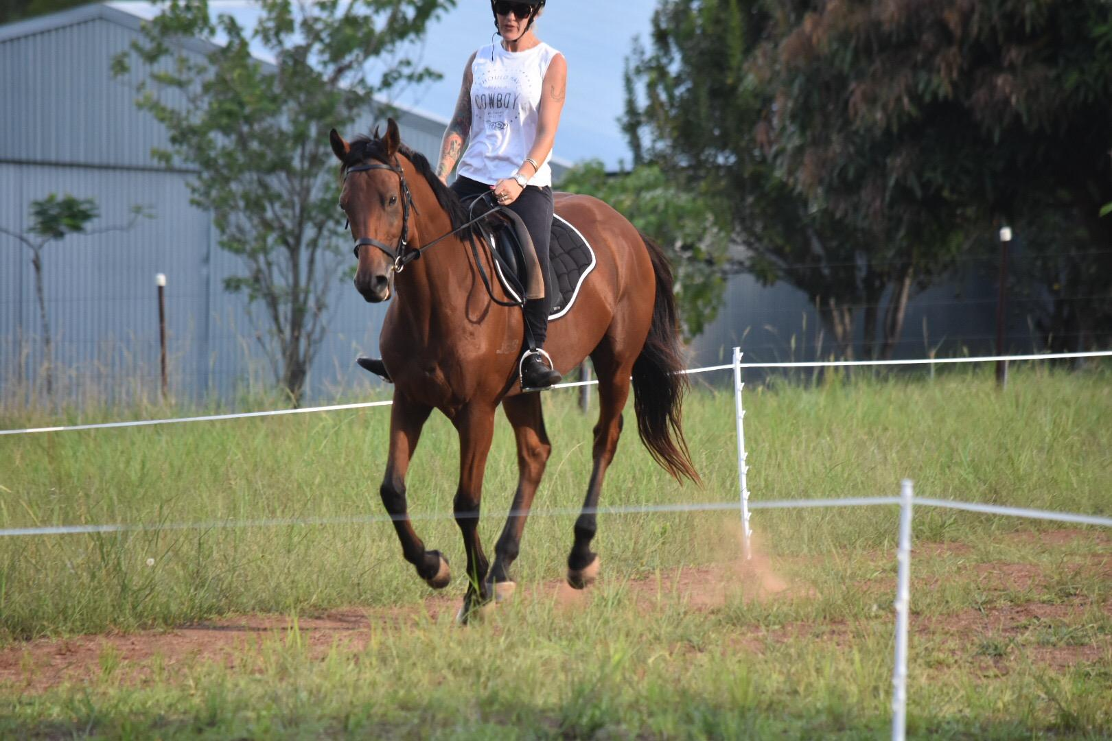 Rising 8yr old Handsome Gelding