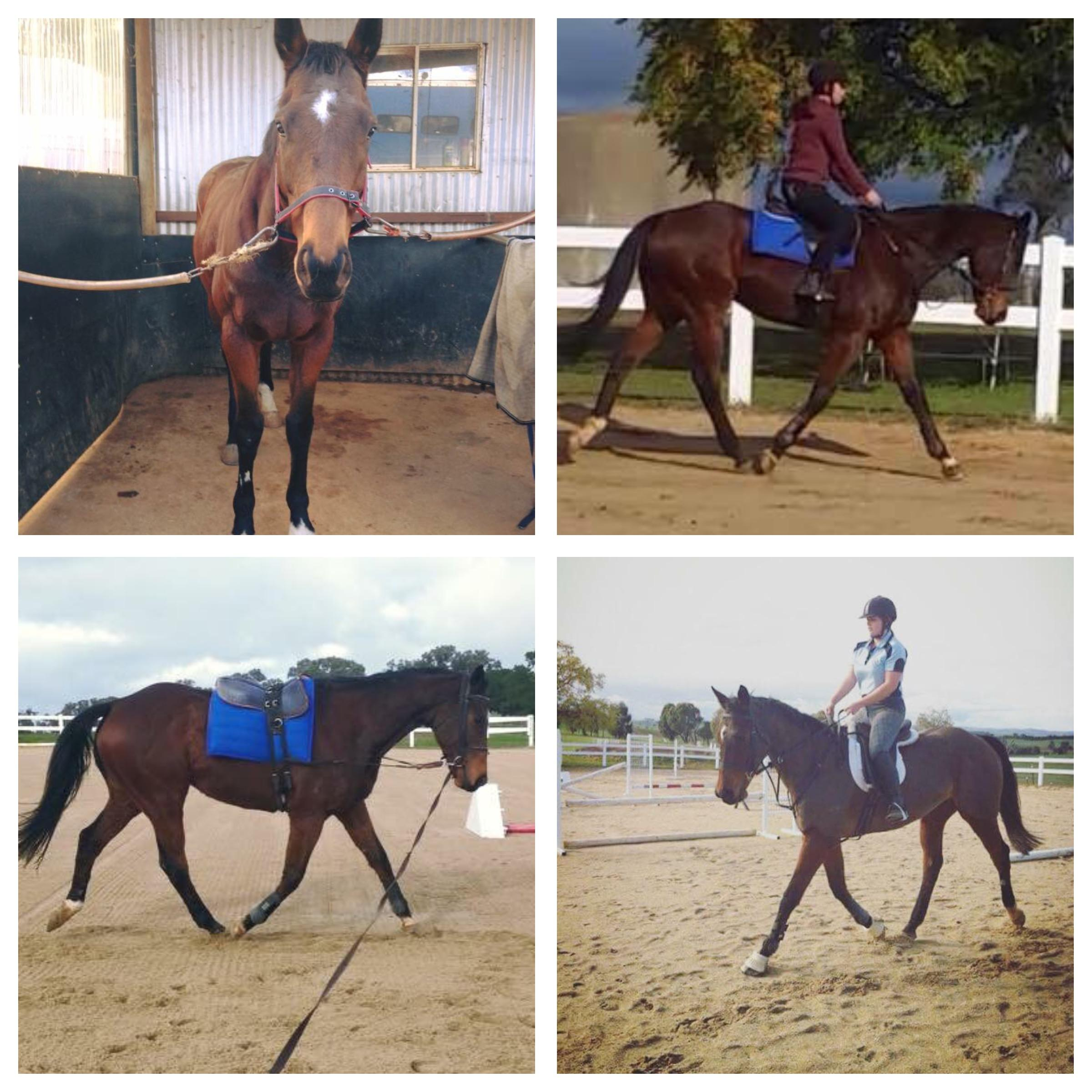 2 thoroughbreds mare and gelding