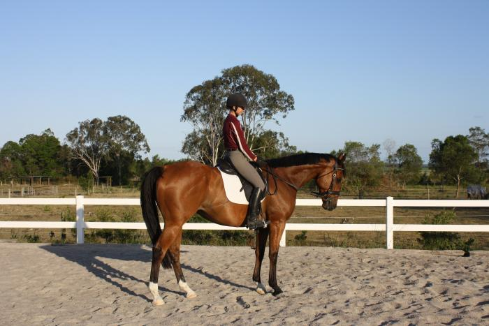 Jumping / Eventing / All Rounder Prospect