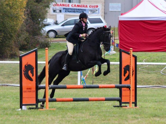 Warmblood x suit Jumping,Dressage, Eventing