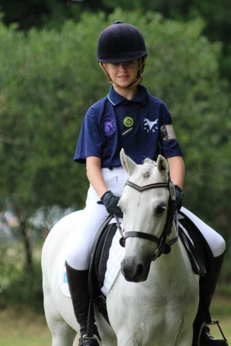 Young Schoolmaster Pony