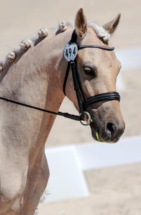 Interschool/Pony Dressage