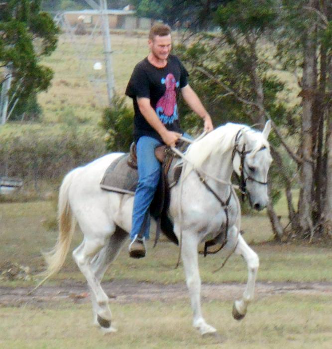 Quiet Blue Stock Horse Gelding + VIDEO++