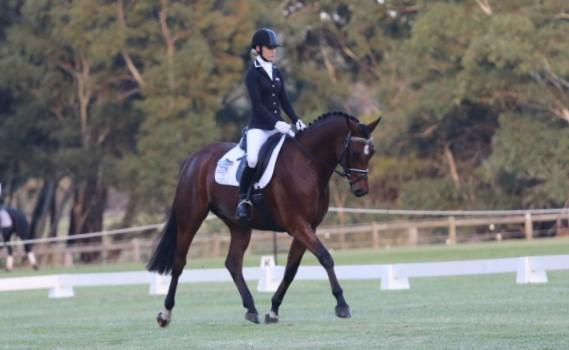 KDH Top This GRPxWB Dressage and Show Horse