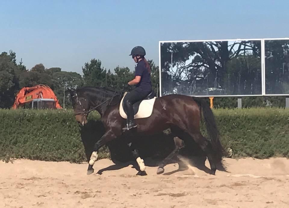 Lovely versatile mare