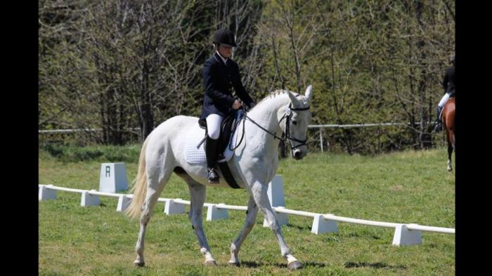 Experienced Pony Club or Interschools Mount