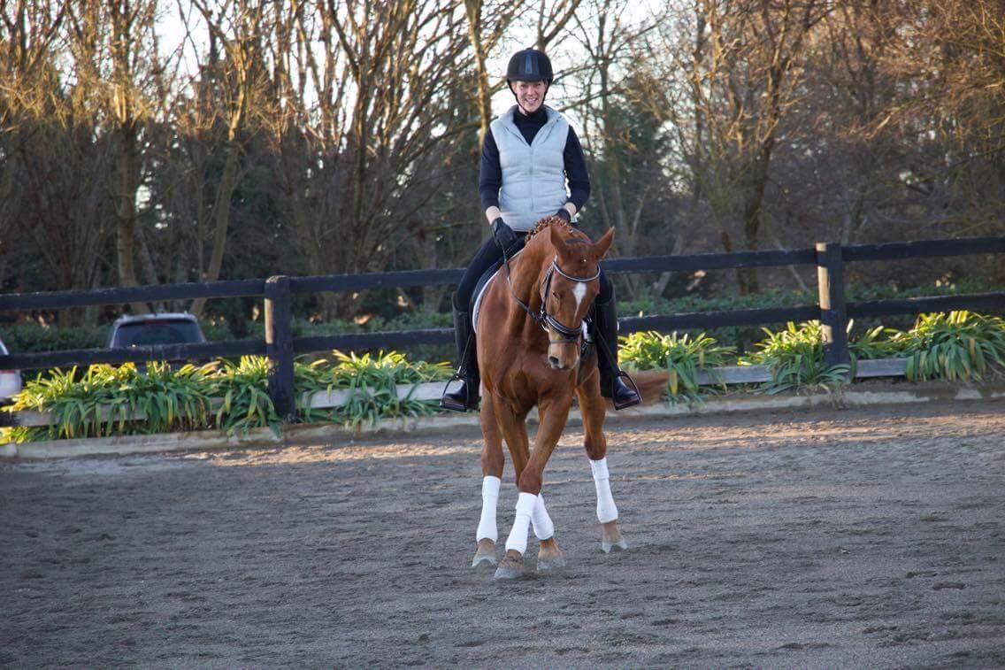 Gorgeous gelding for sale