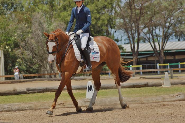 Outstanding Showjumping mare by Balou du Rouet