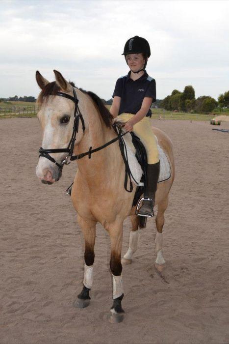 Proformance Pony