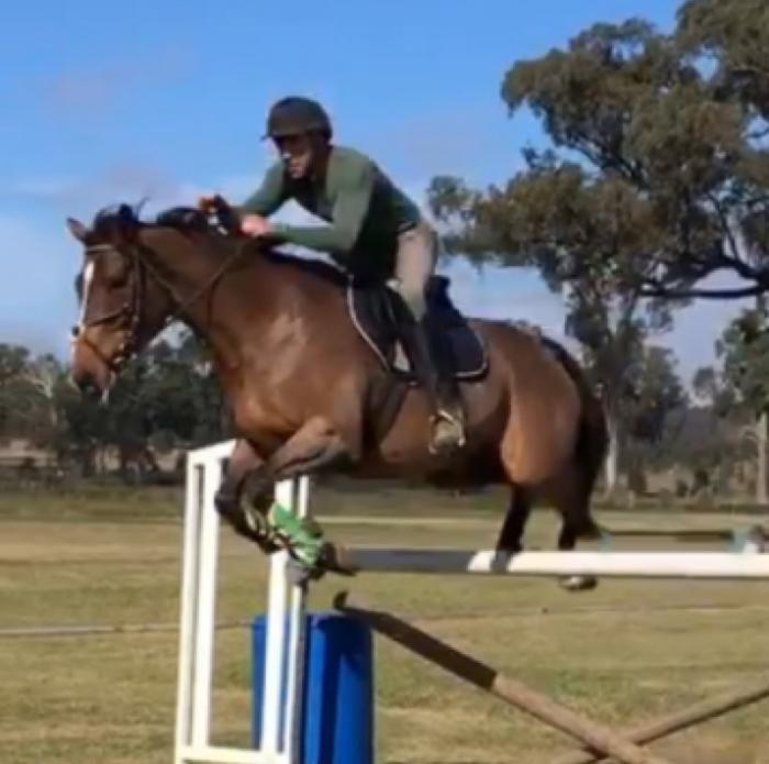 Stunning 16.2hh top showjumping/eventing prospect