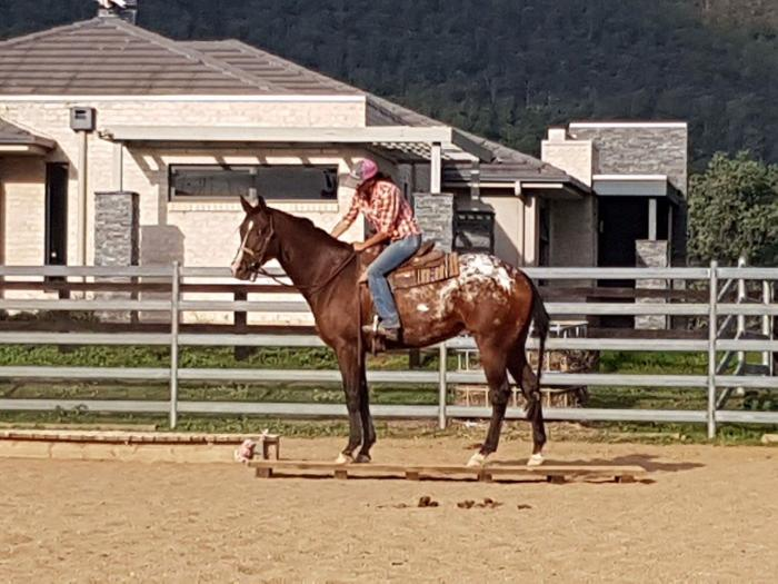 Stunning young horse with huge potential