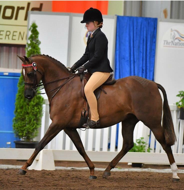 Outstanding child's show pony