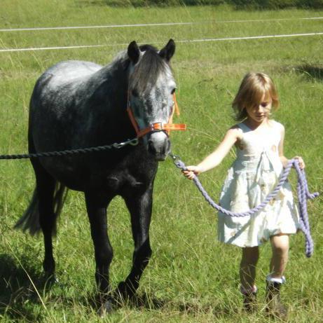 Registered Australian Pony
