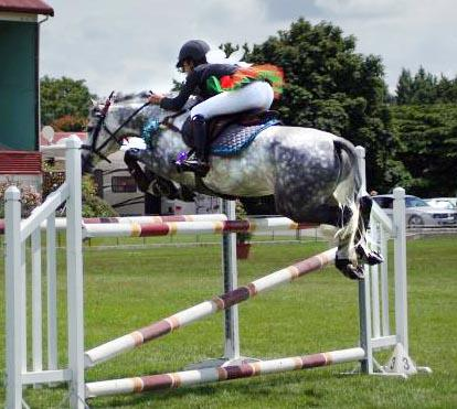 WOW - DREAM WINNING PONY AT ALL DISCIPLINES