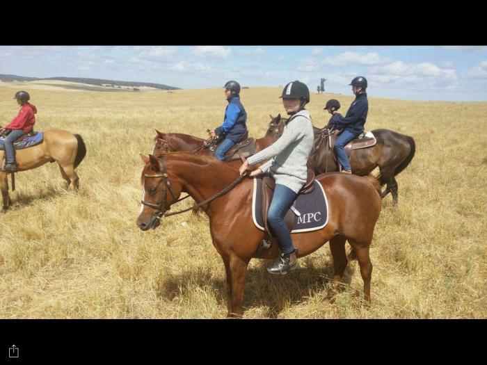 Kamilaroi Sonnet, Pony mare