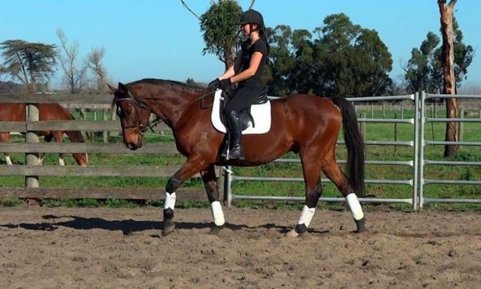 LOVELY GELDING - *MUST SELL*