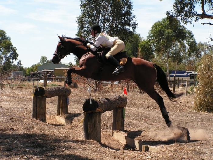 Florrie - small WB mare - jump and breed