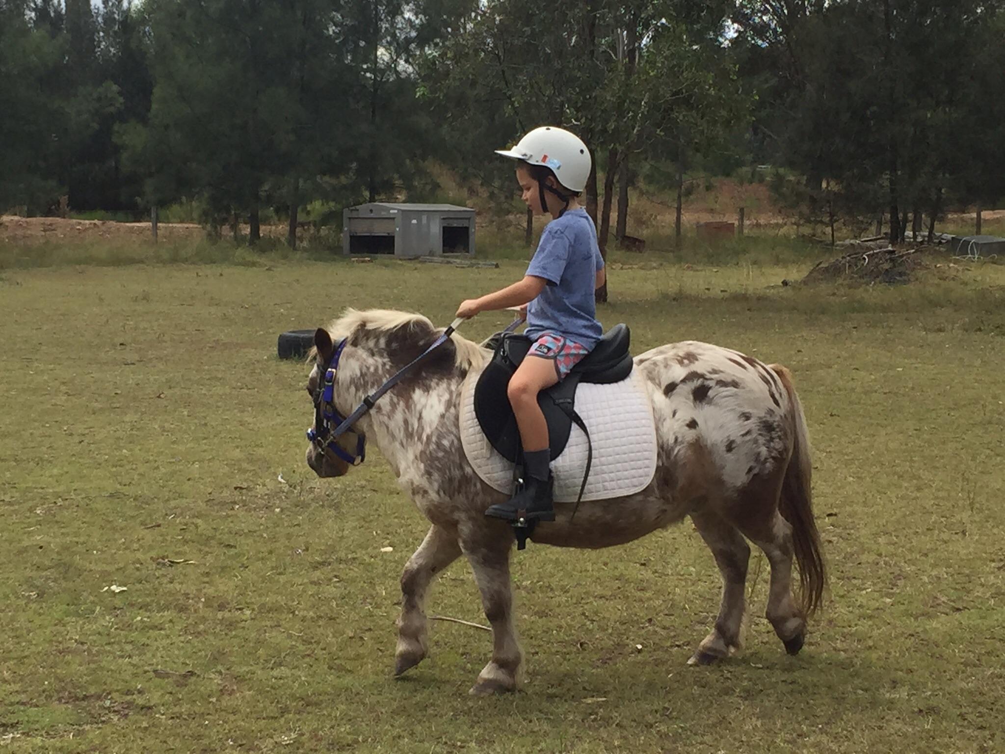 Super quiet Palouse pony