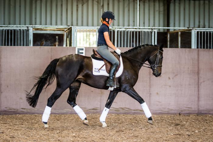 Attractive, talented 4yo dressage mare