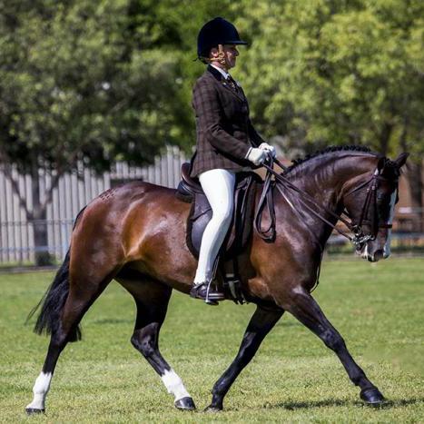 Versatile Show Cob Pony mare