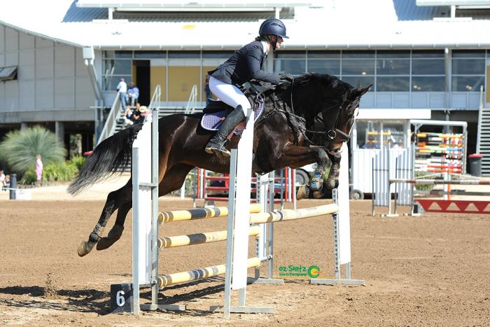 PRICE REDUCED Lovely Young Performance Mare