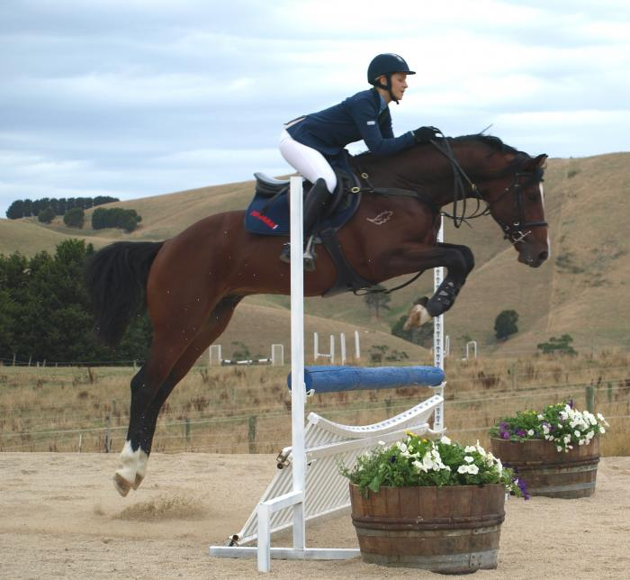Oaks Volta - Lals Haven Warmbloods