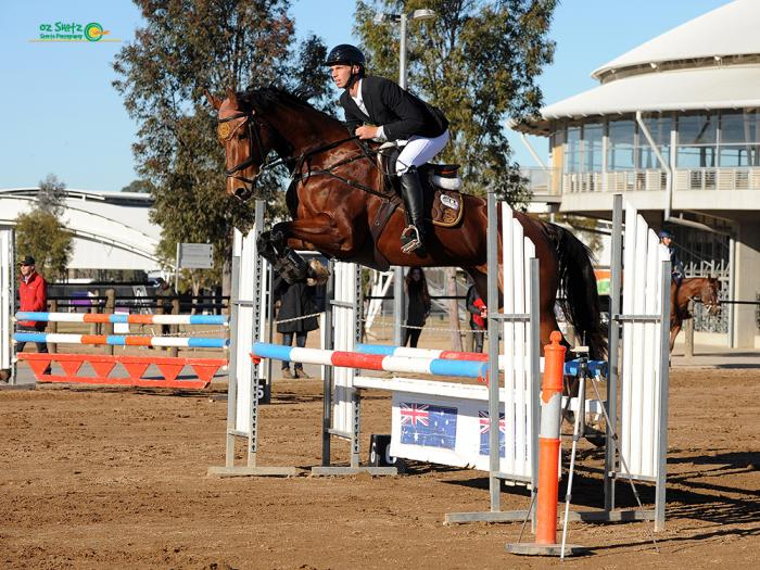 Imported showjumping mare