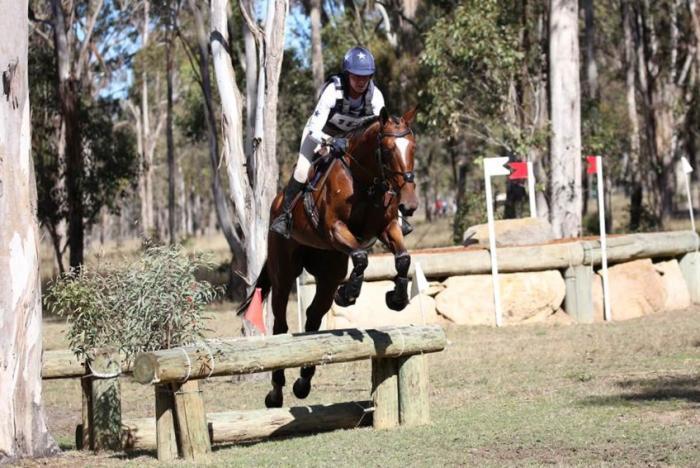 Copabella Visage Mare In Foal To Daiquiri GF